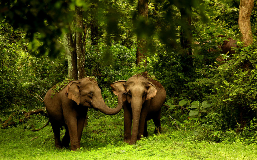 Mysore, Coorg, Wayanad (6nights /7 days)
