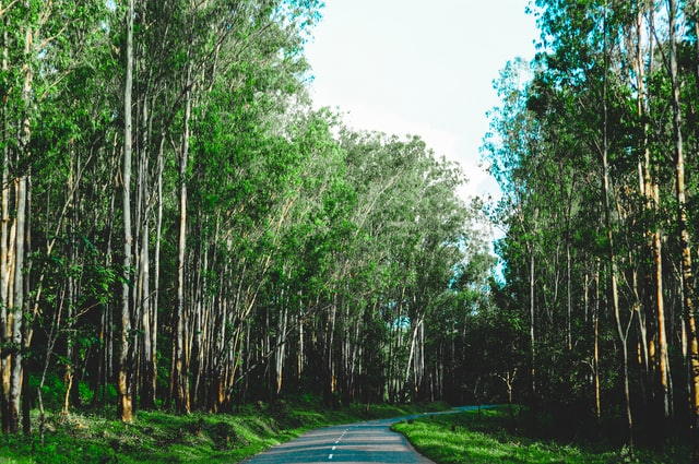 Mysore Wayanad One Day Packages