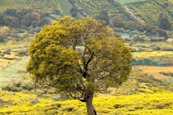 Mysore to Ooty One Day Travel Packages